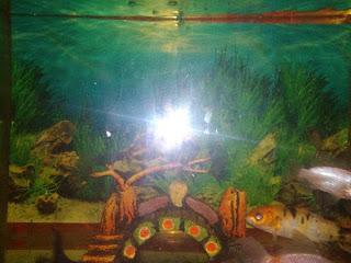 Cara Membersihkan Kaca Aquarium Paling Mudah