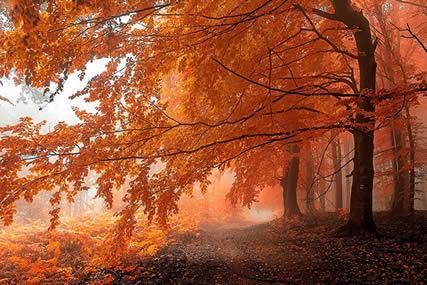 Ağaç Sevgisi Ile Ilgili Kısa Bir şiir Süslünün Günlüğü