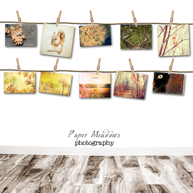 Autumn - Fall Wall Decor. You can purchase and download our photography creations and instantly print at home from our Paper Meadows Photography Shop on ETSY. To Visit our shop now click here.