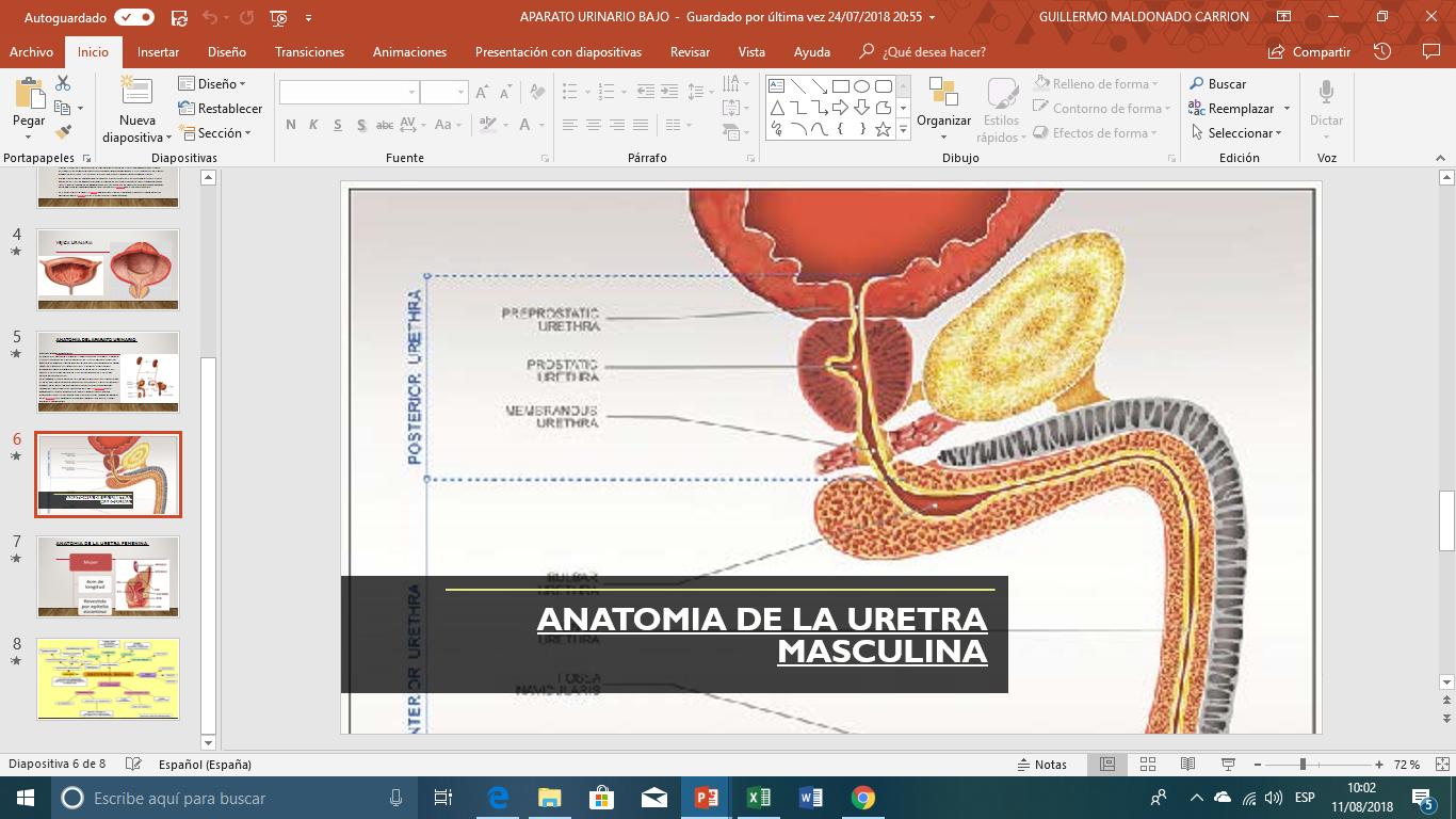 Excepcional Anatomía De La Uretra Composición - Imágenes de Anatomía ...