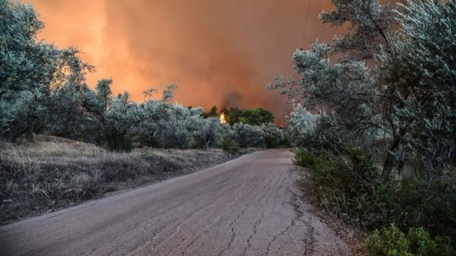 Μεγάλη πυρκαγιά στην Ηλεία - Εκκενώθηκε οικισμός