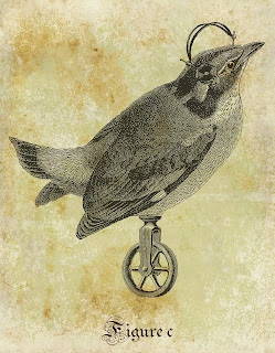 bird collage antique illustration artwork image