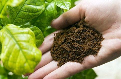 Кофейная гуща. Органические конфеты для растений. | Кофе в ...