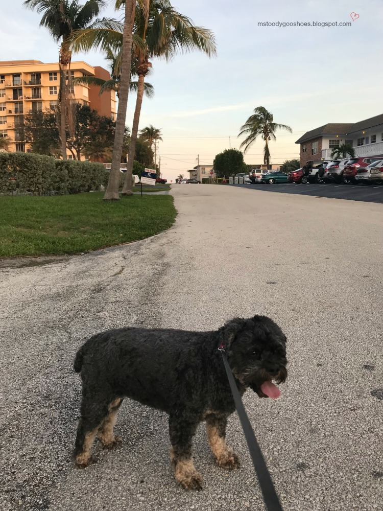 February Photo Diary: A Month In Florida  Ms. Toody Goo Shoes