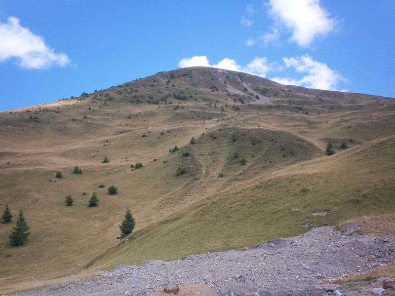 Magarusii de pe trans alpina webcam