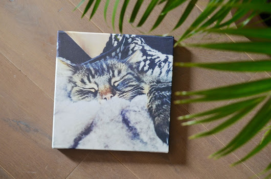 Polished Cats: Deco - Printed Canvas from Fotofabriek.nl