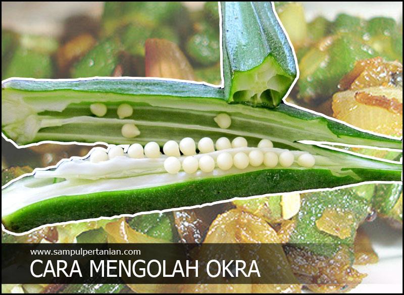 Manfaat & Khasiat Okra, Sayur Berjuta Manfaat Termasuk untuk Diabetes