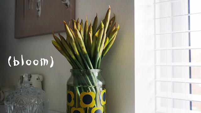Daffodils in a flowery vase