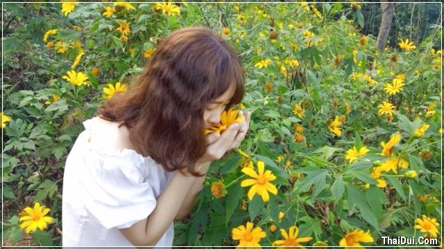 Ảnh hoa dã quỳ và cô gái