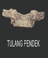 Bentuk-Bentuk Tulang Pendek