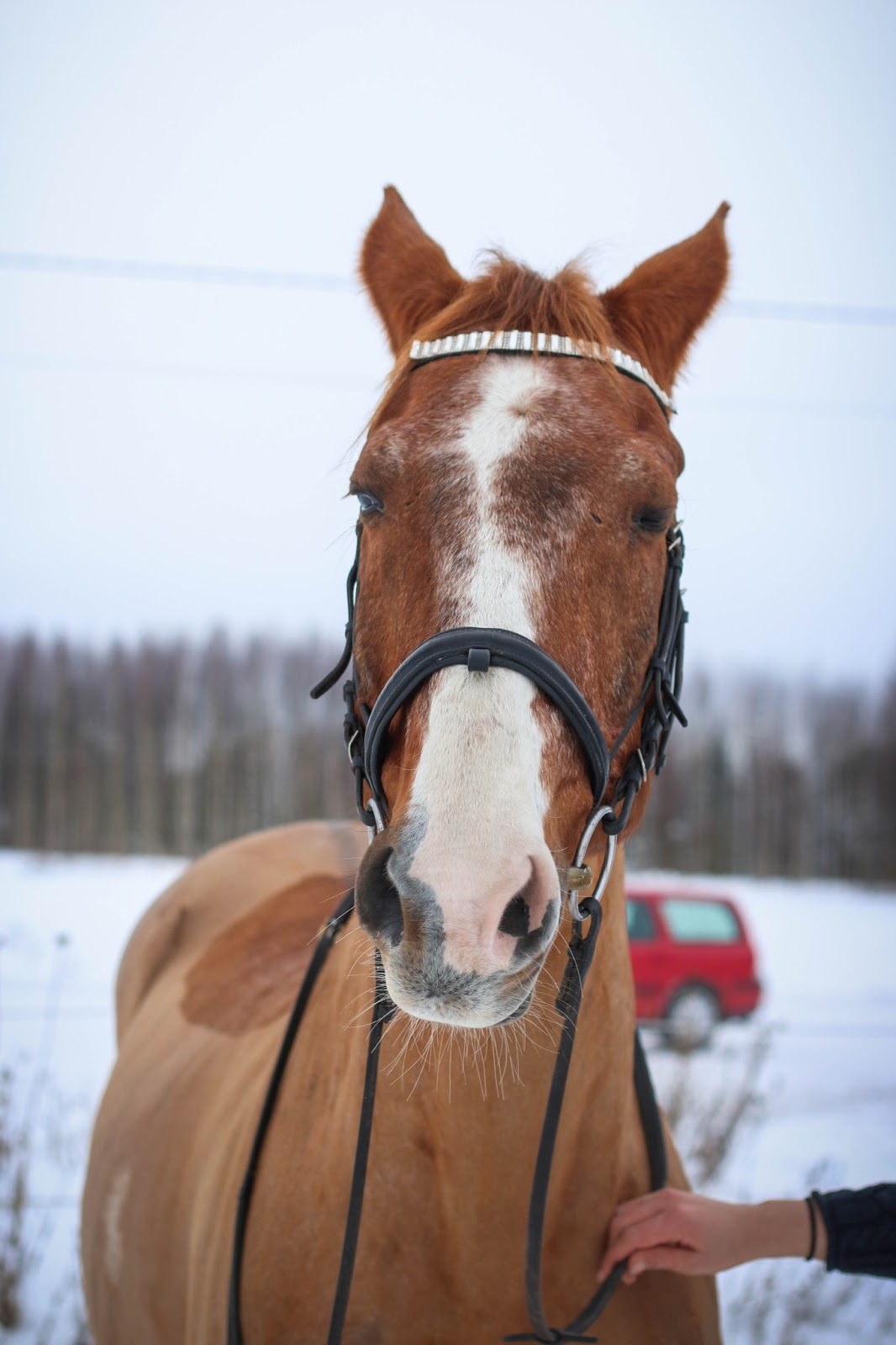 Hevosen Eleet Ja Ilmeet