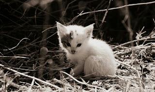 Agar Induk Kucing Mau Menyusui Anaknya
