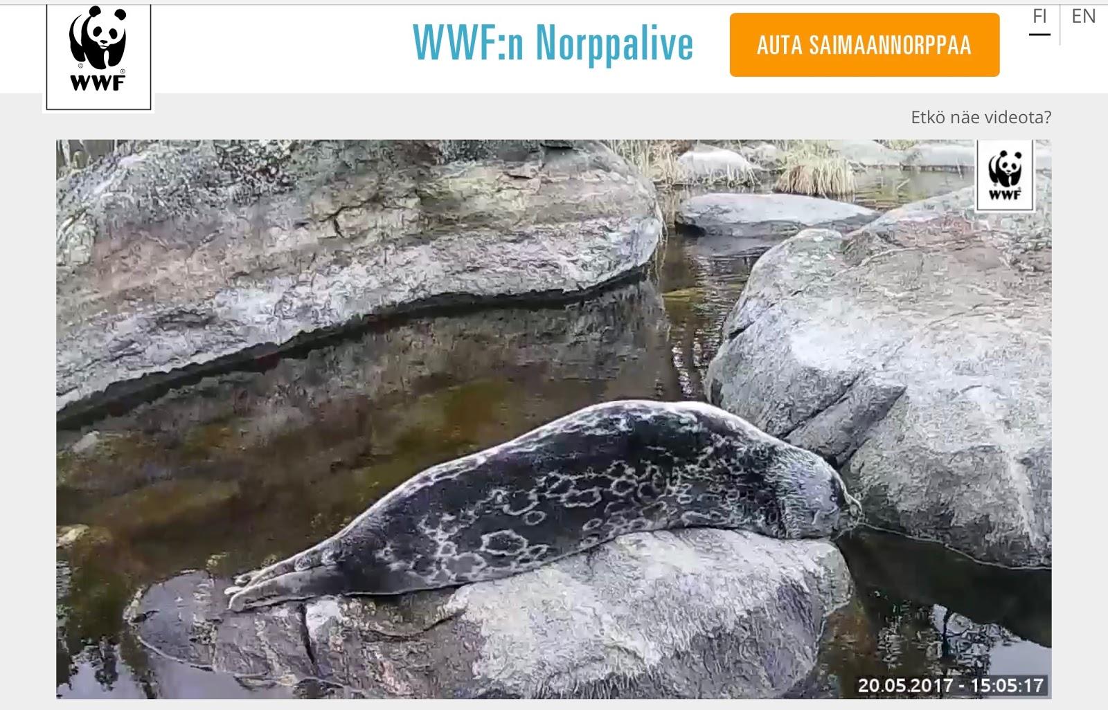 Norppakamera Live