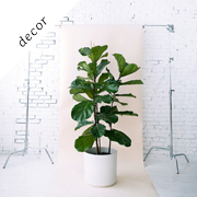 House plants 101 | Designlovefest
