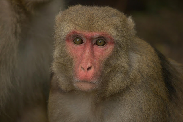 Short birth intervals associated with higher offspring mortality in primates