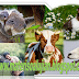 Jenis Kelompok Hewan Yang Termasuk Herbivora Adalah ?