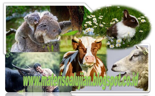 420+ Gambar Kelompok Hewan Herbivora HD
