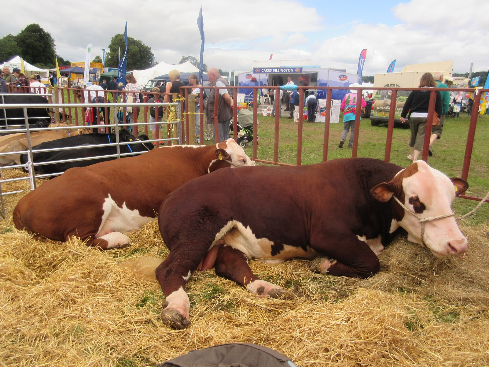 Summer in wales and the chepstow show eccentric england i dont think much of the entertainment negle Choice Image