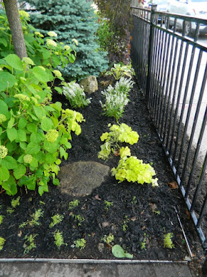 Front Garden Makeover After in the Beach by Paul Jung Gardening Services--a Toronto Gardening Company