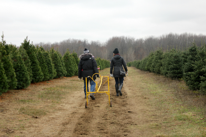 Holiday Family Traditions - A Visit to the Christmas Tree Farm