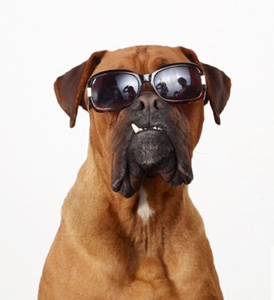 Image result for dogs in sunglasses