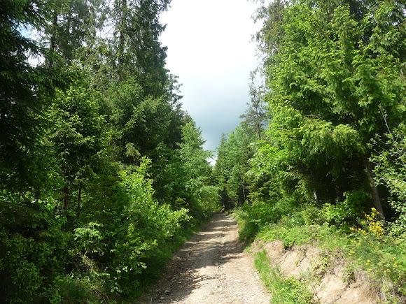 Сколе. Національний парк «Сколівські бескиди»