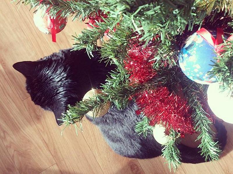 photographie de chat noir, gucci et sa liste de Noël