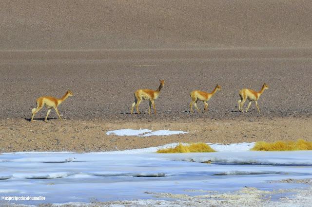 Salar de Tara, Atacama - passeio e trekking personalizados no deserto - Não Pira, Desopila