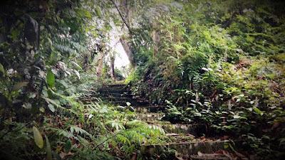 Jalan setapak sebagai jalur treking dalam hutan