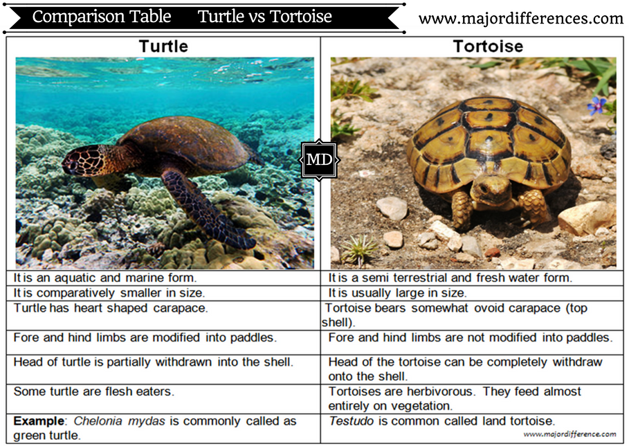 Difference between Turtle and Tortoise (Turtle vs Tortoise) - Comparison table