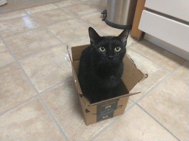 My free sample of Cat has arrived