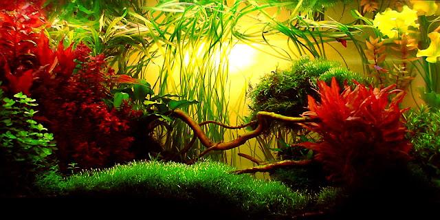 karya seni aquascape yang cantik menarik dan menakjubkan