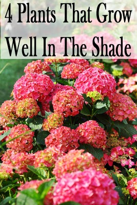 highcountrygardens likewise Shade Garden Plans Planning Shade likewise Portfolio further Plants That Grow In Shade Landscaping further 375487687654073960. on full sun perennial garden designs