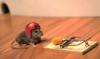 Cara Mengusir Curut Tikus Rumah Dengan Efisien Dari Kamar Dengan Alami Dengan Cuka ataupun Bensin