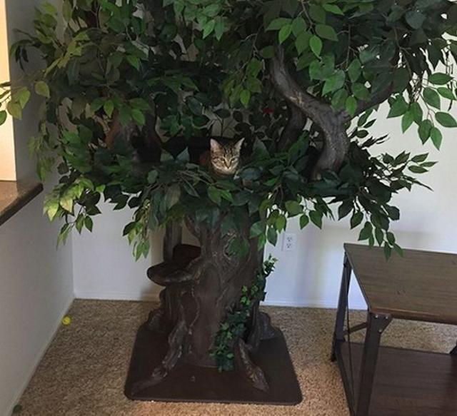 Amazing Cat Furniture
