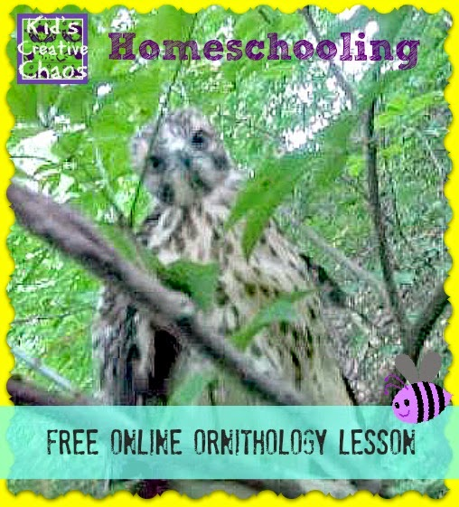 Homeschool Nature Study Ornithology
