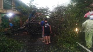 Di Terpa Angin Kencang Dan Hujan Deras ,Sejumlah Pohon Roboh Di Beberapa Ruas Jalan Di Kota Cirebon