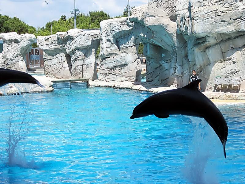 delfini oltremare riccione