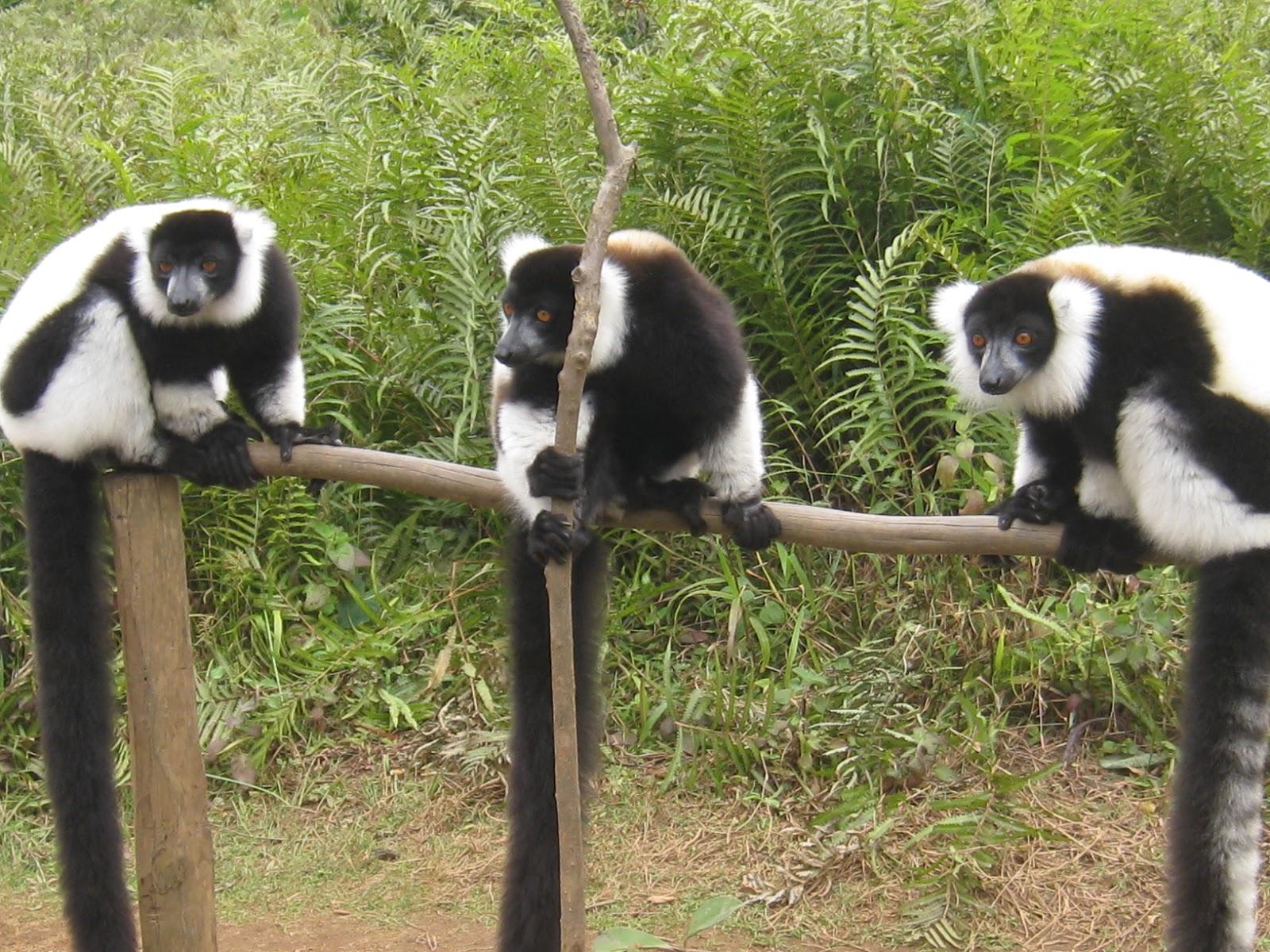 ad4f5d5cf9b3 Lemur Island