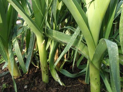 plantas de cultivo fÁcil para iniciarse en la horticultura (el