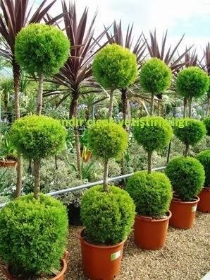 İzmir peyzaj bitkileri