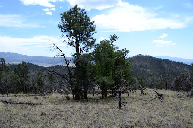 Pinon Knob with much burned tree