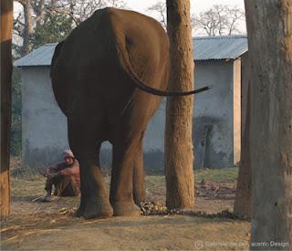 elefant läuft mechanisch