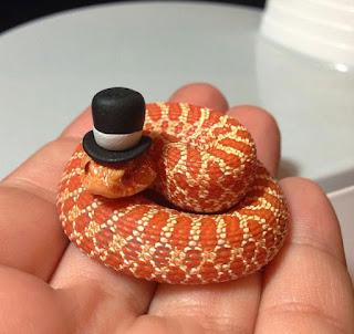 Serpiente con sombrero.