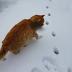 Τι κανει μια γατα οταν βλεπει πρωτη φορα χιονι