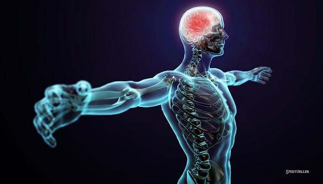 the-human-body-by-gil-lederman.jpg