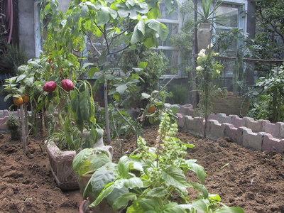 i am preparing my garden soil for the growing season