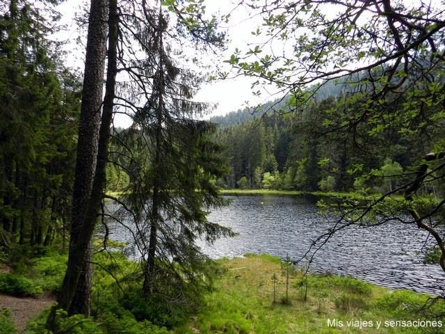 Lago Herrenwies, Selva Negra, Alemania