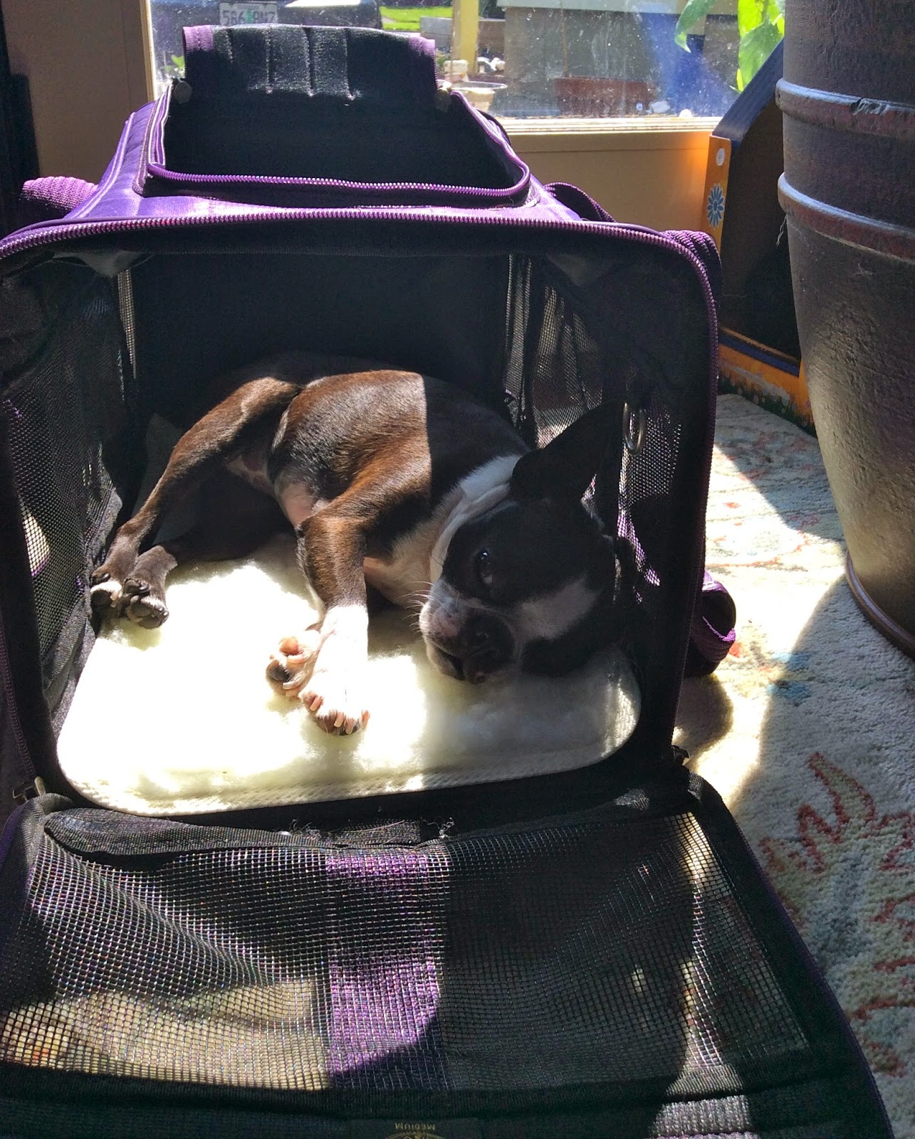 Sinead sleeping in her travel carrier