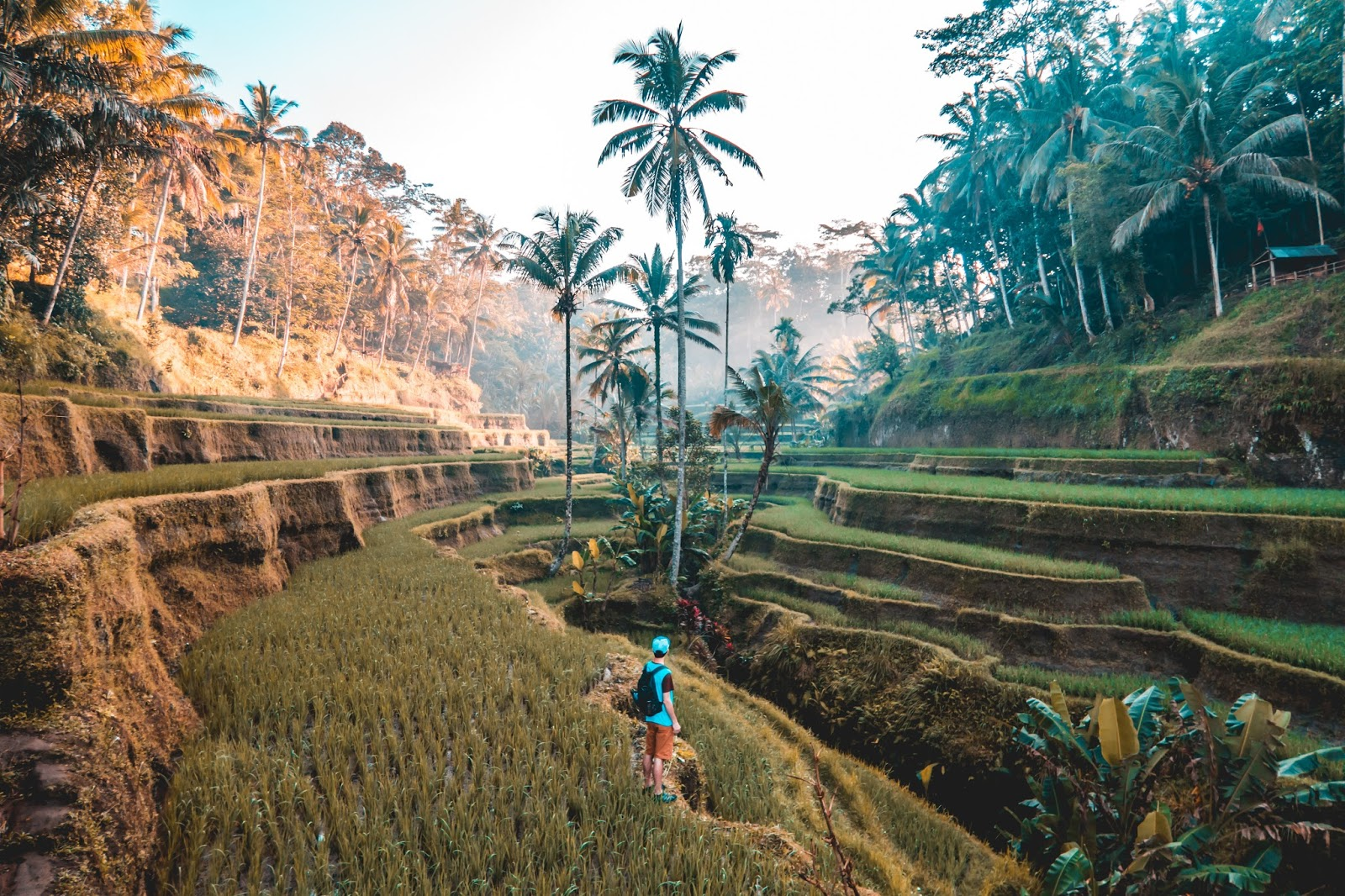 Terraced hills in Bali